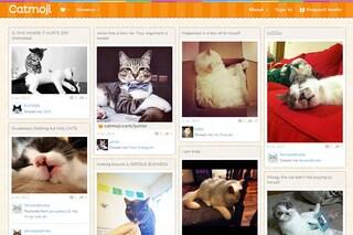 Arriva Catmoji, il social network dedicato ai gatti (e ai loro padroni)
