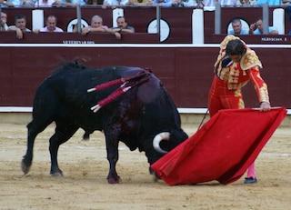 Corrida a San Fermin: torero incornato salvo per miracolo