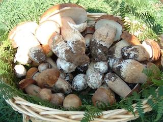 Sagra dei funghi a Cusano Mutri fino al 3 ottobre
