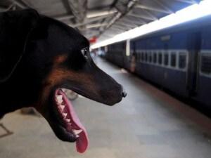 Viaggiare in treno col cane