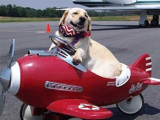 Viaggiare col cane in aereo: come portare Fido a bordo con noi