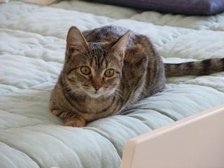 Dove lasciare il gatto quando si va in vacanza: ci vorrebbe un amico