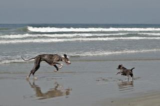 Jesolo, spiagge per cani: dove portare Fido al mare sul litorale veneto?