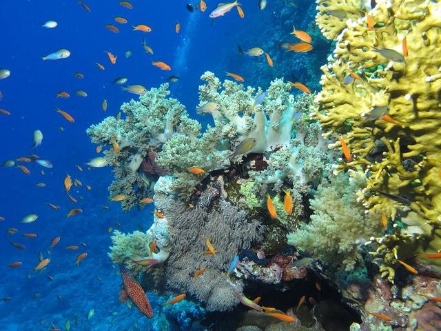 barriera corallina mar rosso