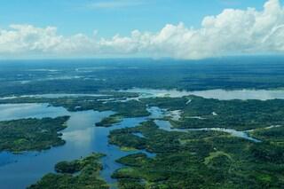 Le foreste pluviali, il polmone verde del nostro pianeta