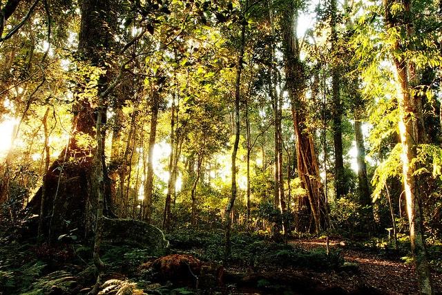 foreste pluviali australia