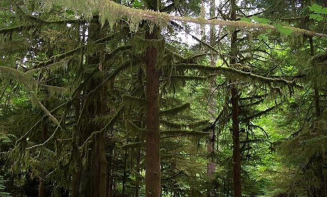 foreste pluviali canada