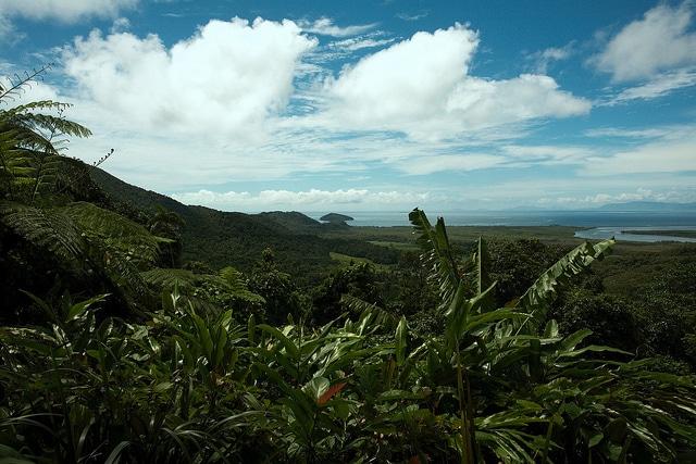 foreste pluviali daintree