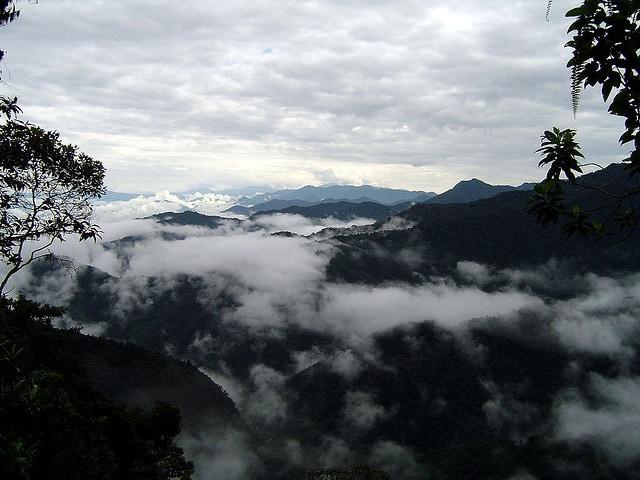 foreste pluviali ecuador