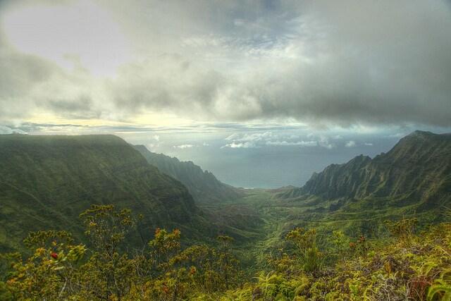 foreste pluviali hawaii