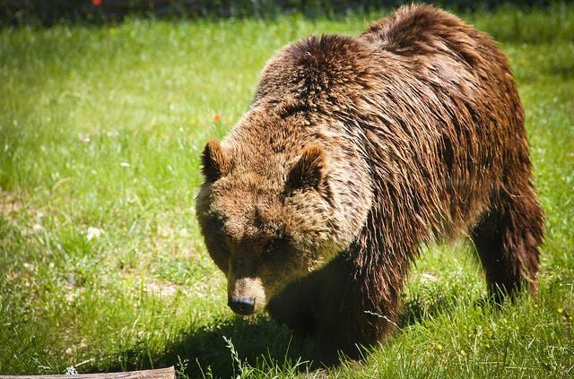 parchi nazionali orso marsicano