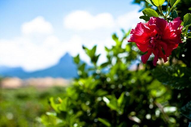 mauritius fiore