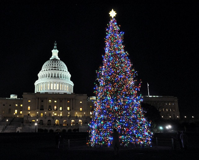 alberi di natale washington