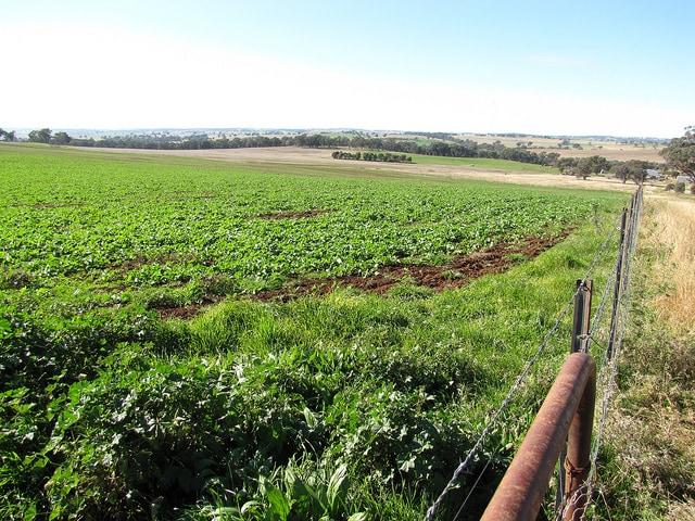 Lavoro all'estero, fattoria in Australia