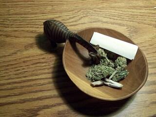 Cannabis Cup: Amsterdam elegge il raccolto migliore dal 18 al 22 Novembre