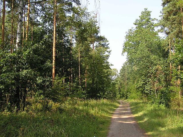 Foresta di Grunewald, Berlino