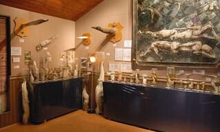 Il Museo del Pene in Islanda, la collezione più strana del mondo