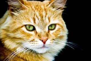 I musei dei gatti a Kuching e Amsterdam: regalità felina in mostra