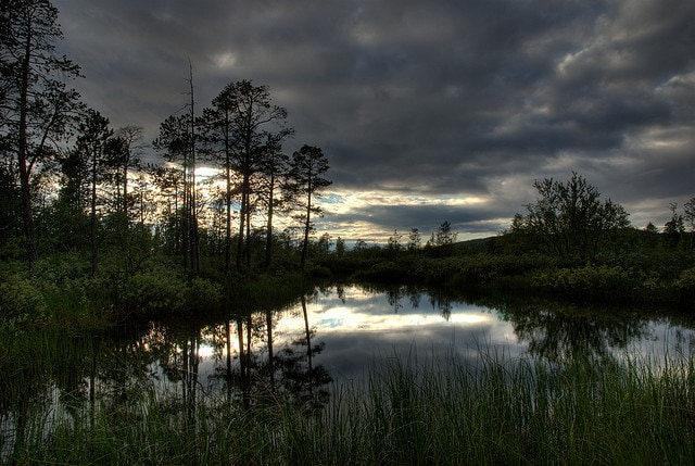 Foreste lapponi in Finlandia