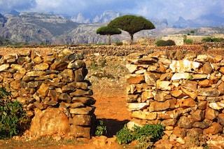 Socotra, la splendida isola dello Yemen che non conosce il turismo