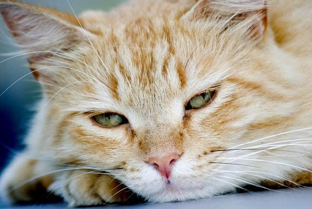 mostra felina