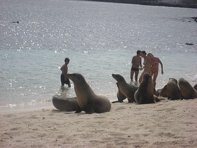 Playa Mann [Foto di Wikipedia]