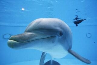 Un amore immenso per i delfini, dove incontrarli nel Mediterraneo (FOTO)