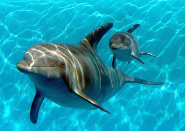 Bagno con i delfini foto di viva wyndham maya an all inclusive