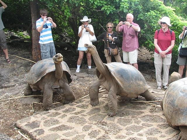 tartarughe giganti Galapagos [Foto di Wikimedia Commons]