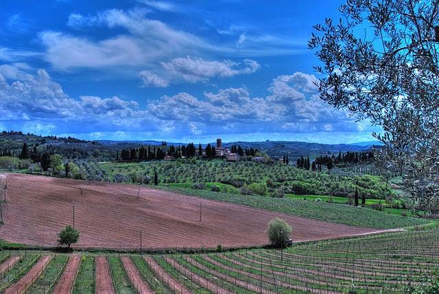 Vigneti in Toscana [Foto di Wikimedia Commons]