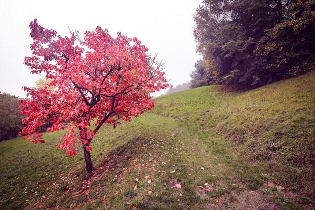 Novembre in Italia