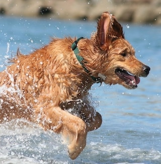 Vacanze al mare con il cane: viaggi a quattro zampe