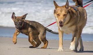 Cani e padroni in vacanza: i problemi dei nostri amici a quattro zampe