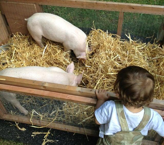 Nella vecchia fattoria: Manor Farm.