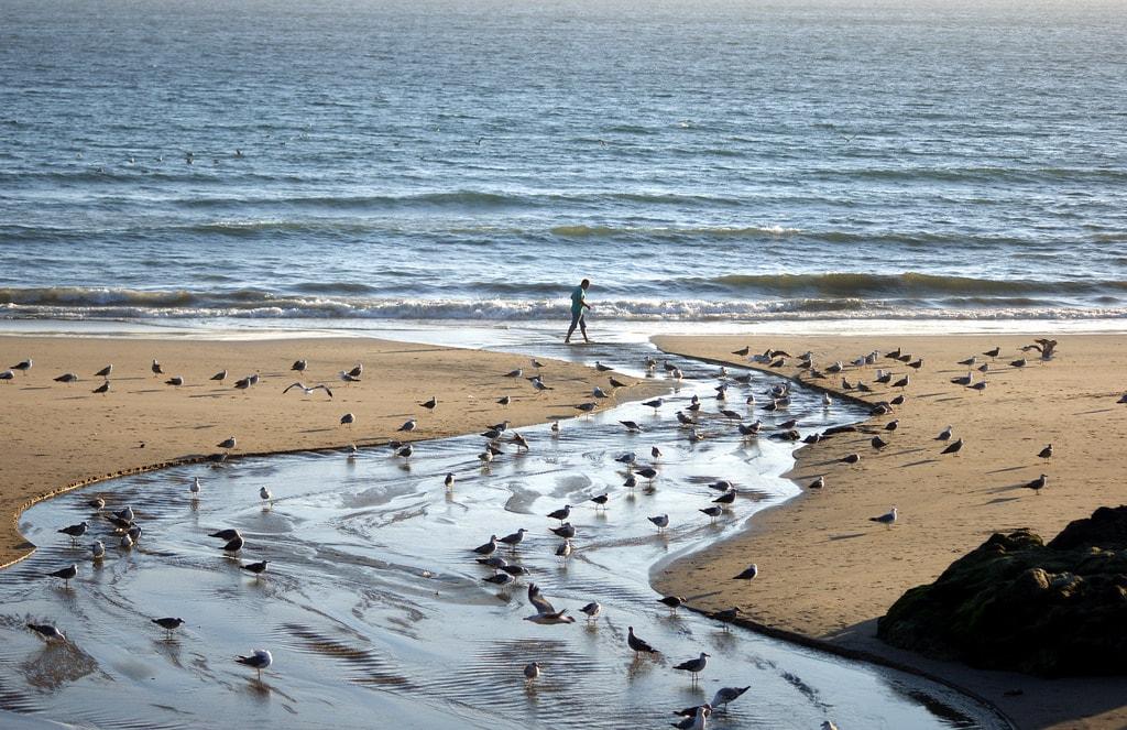 Spiaggia di Porto. Foto di Nicola Sapiens De Mitri