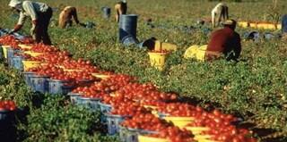 Turni massacranti per 1,5 euro l'ora, lavoratori stranieri sfruttati nei campi in Calabria