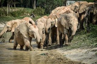 Sudafrica, bracconiere in fuga dai ranger muore calpestato da un branco di elefanti