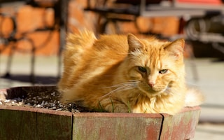 Venezia, danno fuoco alle casette di un ricovero per gatti: arrestati due 20enni