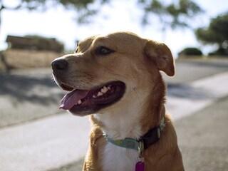 Gli animali potranno essere curati con farmaci a uso umano: Speranza ha firmato decreto