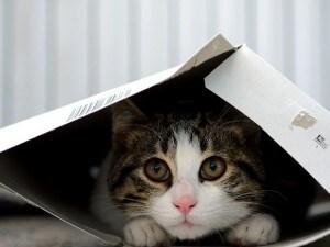 Prende a calci un gatto salito nella sua auto: dovrà pagare una multa di 10mila euro