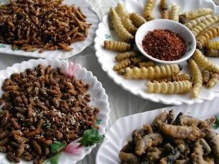 Le tarme della farina potranno essere mangiate dagli uomini: ok da ente per la sicurezza alimentare