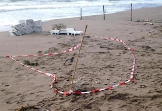 Orrore in spiaggia ad Albarella: turista trova pezzo di mandibola mentre gioca sulla sabbia