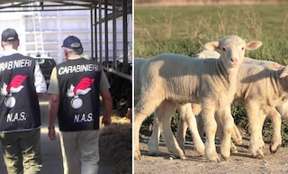 Controlli di Pasqua, carabinieri salvano 40 agnellini da macellazione abusiva