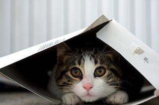 """Ritrova gatto e posta foto online, insultata dal gestore del canile: """"Voi gattare dovete morire"""""""
