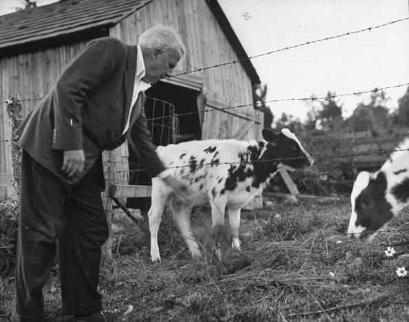 Lo scrittore Robert Frost nella sua fattoria.