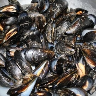 Cozze allevate in mare contaminate da saxitossina