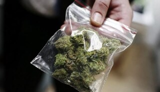 Bologna, scoperte quasi 100 piante di marijuana a casa di due pensionati