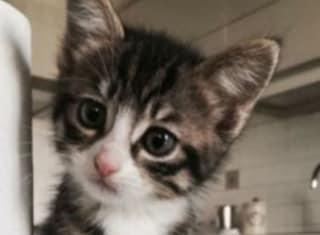 Lecce, getta nella spazzatura 5 gattini appena nati: pensionato incastrato dalle telecamere