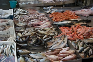Bari, sequestrate 7 tonnellate di pesce surgelato scaduto dal 2015 destinato ai supermercati