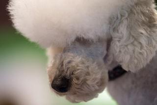 Oristano, lascia il cane in auto e va a fare la spesa: il cucciolo muore sotto il sole
